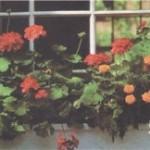 Как высаживать растения за окном