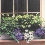 Многоцветие за окном